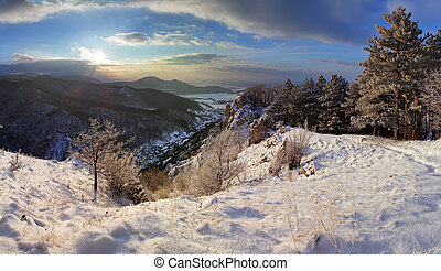 Forest mountain landscape at winter