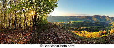 Forest - mountain panoramic view