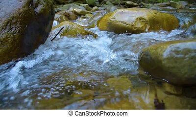Forest Mountain Stream. Forest River. Mountain River. Water....