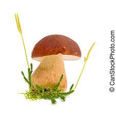 forest mushroom closeup