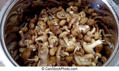 Forest Mushroom In The pan - Forest Fresh Young honey agaric...