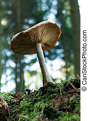 Forest mushroom - Underneath shot of a fresh forest mushroom