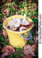 Forest mushrooms in a yellow bucket.