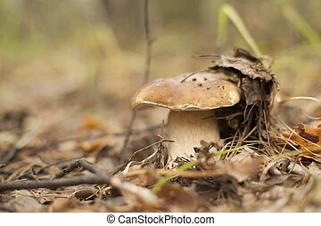 Forest mushrooms in the grass