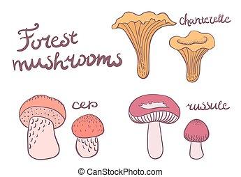 Forest mushrooms set