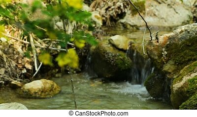 Forest natural creek background - The mountain stream flows...