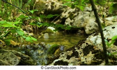 Forest Natural Creek - The mountain stream flows through the...