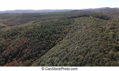 Forest Nature Aerial Drone View Aerial View Of Forest Drone Shot Flying Over Spruce Conifer Treetops Nature Background Canstock