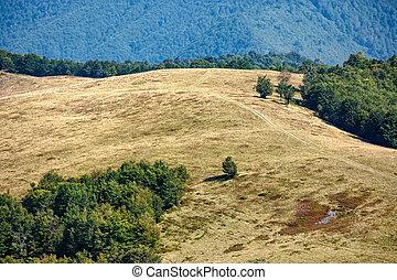 forest near meadow on mountain  hillside