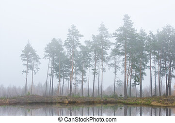 forest near river in the early morning