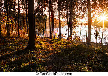Forest near the lake