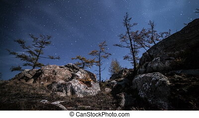 Forest Night Time Lapse. Rotating srars above trees