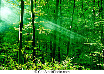 Forest of dreams - Green forest with sunrays.