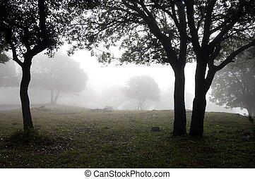 through the fog - forest of oak through the fog in Vilanova...