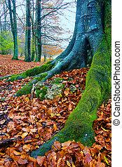Forest of Opakua in autumn, Alava (Spain)