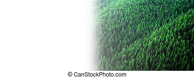 Forest of Pine Trees in Wilderness Mountains Fading to White Background