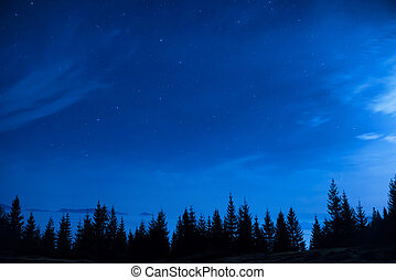 Forest of pine trees under blue dark night sky with many...