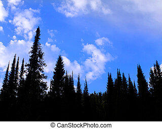 Forest of Pine Trees with Blue Sky and Clouds