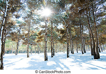 Forest on a bright sunny winter day