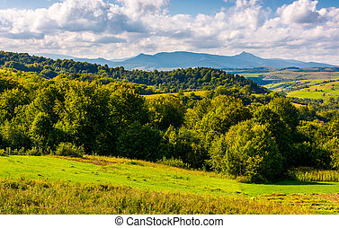 forest on a grassy hill in afternoon. Pikui mountain in the...