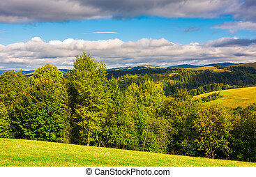 forest on a grassy hills of Carpathian mountains. lovely...