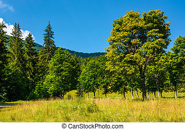 forest on a grassy meadow in mountains. beautiful summer...