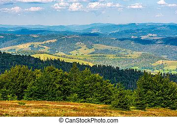 forest on a hillside of Carpathian Mountain Ridge. Beautiful...