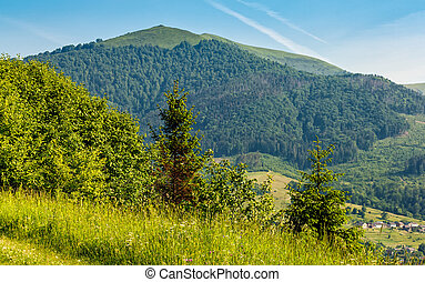 forest on a mountain hillside in rural area - forest in...