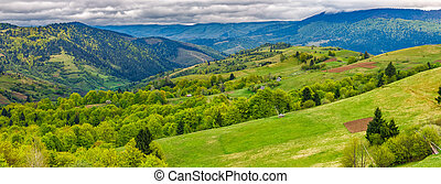 forest on a mountain hillside in rural area - Panoramic...