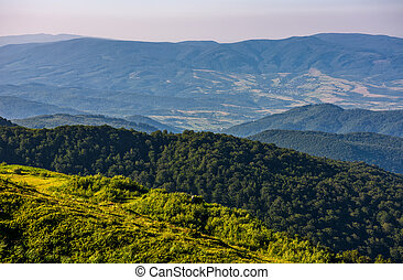 forest on a mountain slope viewed from the top - slope of...