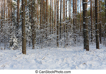 forest on a winter day