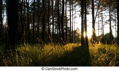 Forest on Against Sunset