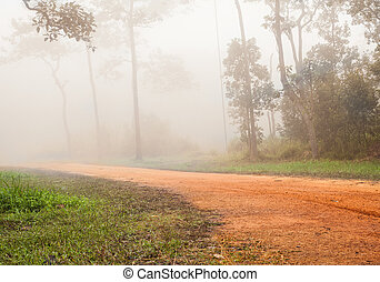forest on foggy road