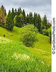 forest on grassy hillside in springtime. lovely nature...