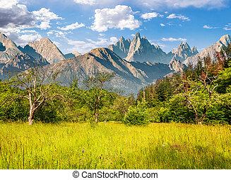 forest on grassy hillside in tatras - Composite summer...
