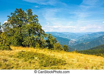 forest on grassy hillside of Carpathians. beautiful summer...