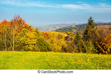 forest on grassy meadow in autumn at sunrise. forested...