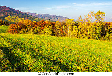 forest on grassy meadow in autumn. beautiful sunrise in...