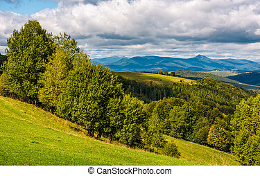 forest on hillside meadow in mountainous area. lovely...