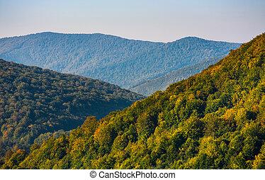forest on mountain hillside at sunrise
