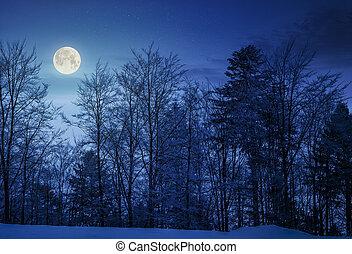 forest on snowy hillside at night in full moon light....
