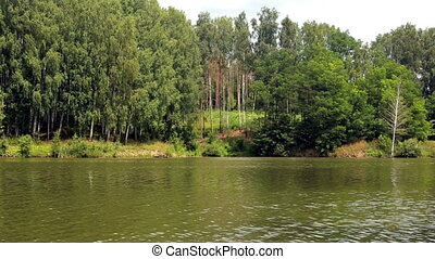 Forest on the bank of the river