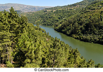 Forest on the banks of Douro river
