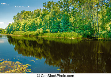 Forest on the banks river