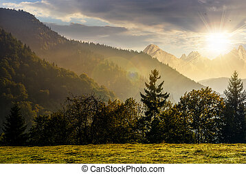 Forest on the hillside in High Tatras at sunset - Spruce...