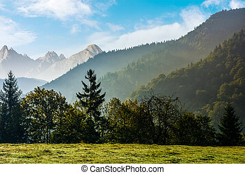 Forest on the hillside meadow in High Tatras - Spruce forest...