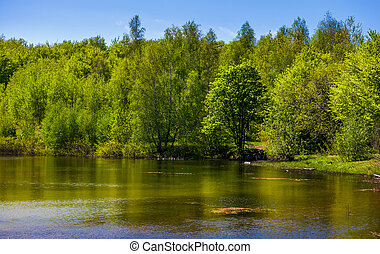 forest on the lake shore. lovely nature scenery on a bright...