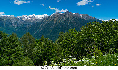 Forest on the rocky mountains in switzerland. Kanton Tessin.