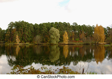 Forest on the shore of the lake with reflection