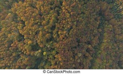 forest., op, vliegen, herfst